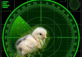 Nieuwe kuikens op de Radar