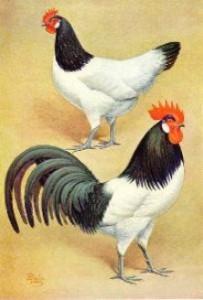 lakenvelder19451